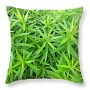 Young Goldenrod Before Blossoms Throw Pillow