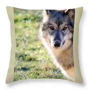 Young Gray Wolf In Light Throw Pillow