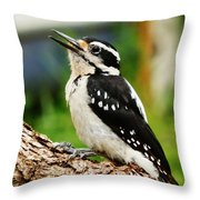 Young Hairy Woodpecker Throw Pillow