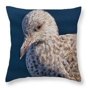 Young Herring Gull Throw Pillow