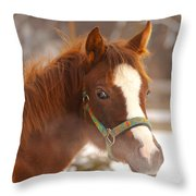 Young Horse In Winter Day Throw Pillow