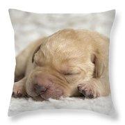 Young Labrador Puppy Throw Pillow
