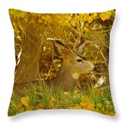 Young Male Buck Throw Pillow
