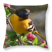 Young Male Oriole Throw Pillow