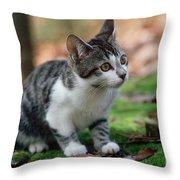 Young Manx Cat Throw Pillow