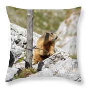 Young Marmot Throw Pillow