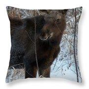 Young Moose 4 Throw Pillow