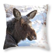 Young Moose Resting Throw Pillow
