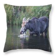 Young Moose Throw Pillow