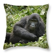 Young Mountain Gorilla Throw Pillow