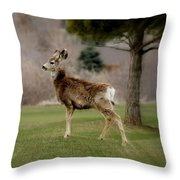 Young Mule Deer Throw Pillow