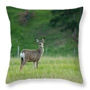Young Mule Deer Throw Pillow