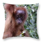 Young Orangutan Kiss Throw Pillow