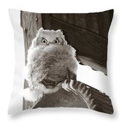 Young Owl On Wheel Throw Pillow by Roger Snyder