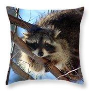 Young Raccoon In Birch Tree Throw Pillow