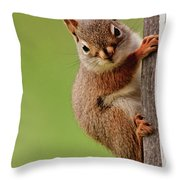 Young Red Squirrel Throw Pillow