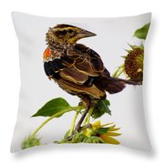 Young Redwing In The Wind Throw Pillow