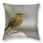 Young Robin Throw Pillow
