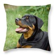 Young Rottweiler Throw Pillow
