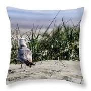 Young Seagull No. 1 Throw Pillow
