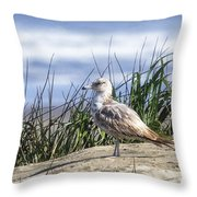 Young Seagull No. 2 Throw Pillow