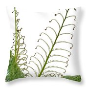 Young Spring Fronds Of Silver Tree Fern On White Throw Pillow