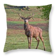 Young Stag Throw Pillow