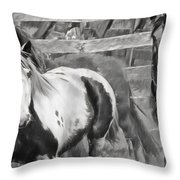 Young Stallions Throw Pillow