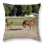 Young Thoroughbrerds  Throw Pillow
