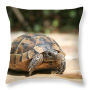 Young Tortoise Emerging From Its Shell Throw Pillow