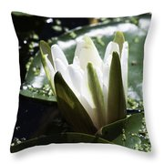 Young Water Lily Throw Pillow