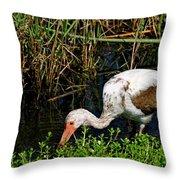 Young White Ibis Throw Pillow