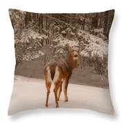Young White Tailed Buck In Winter Throw Pillow