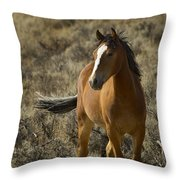 Young Wild Mare   #0307 Throw Pillow