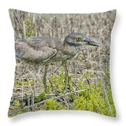 Young Yellow-crowned Night Heron Throw Pillow
