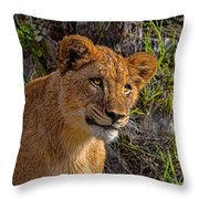 Your Lioness Throw Pillow