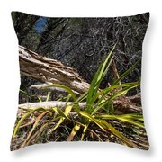 Pedernales Park Texas Yucca By The Dead Tree Throw Pillow