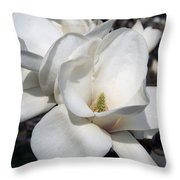 Yulan Magnolia  4753 Throw Pillow