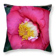 Yuletide Camelia Throw Pillow