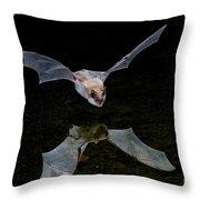 Yuma Myotis Bat Throw Pillow