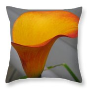 Zantedeschia Named Flame Throw Pillow