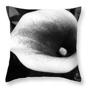 Zantedeschia Named Picasso Throw Pillow