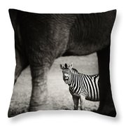 Zebra Barking Throw Pillow