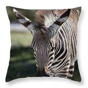 Zebra Crossing V7 Throw Pillow