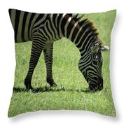 Zebra Eating Grass Throw Pillow