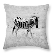 Zebra Explorer Throw Pillow