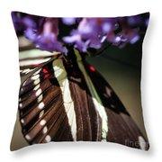 Zebra Heliconian Heliconius Charithonia Throw Pillow