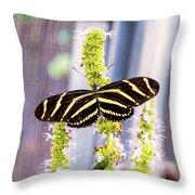 Zebra II Throw Pillow