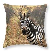 Zebra In Serengeti Throw Pillow