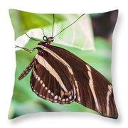 Zebra Iv Throw Pillow